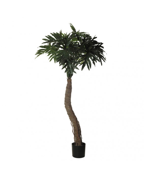 Planta Filodendro para jardín