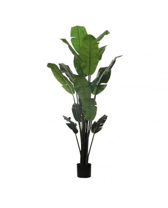 Planta bananera para terraza