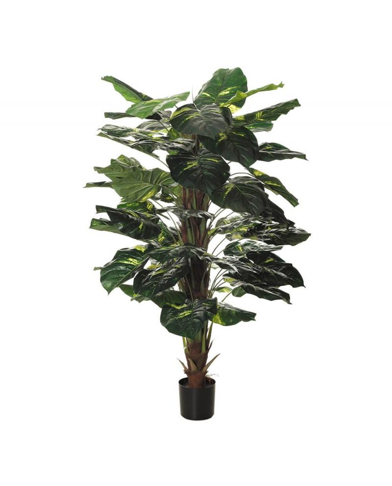 Planta Diafembachia para interior