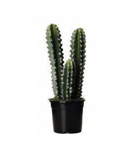 Planta Hoodia artificial alto 44 cm